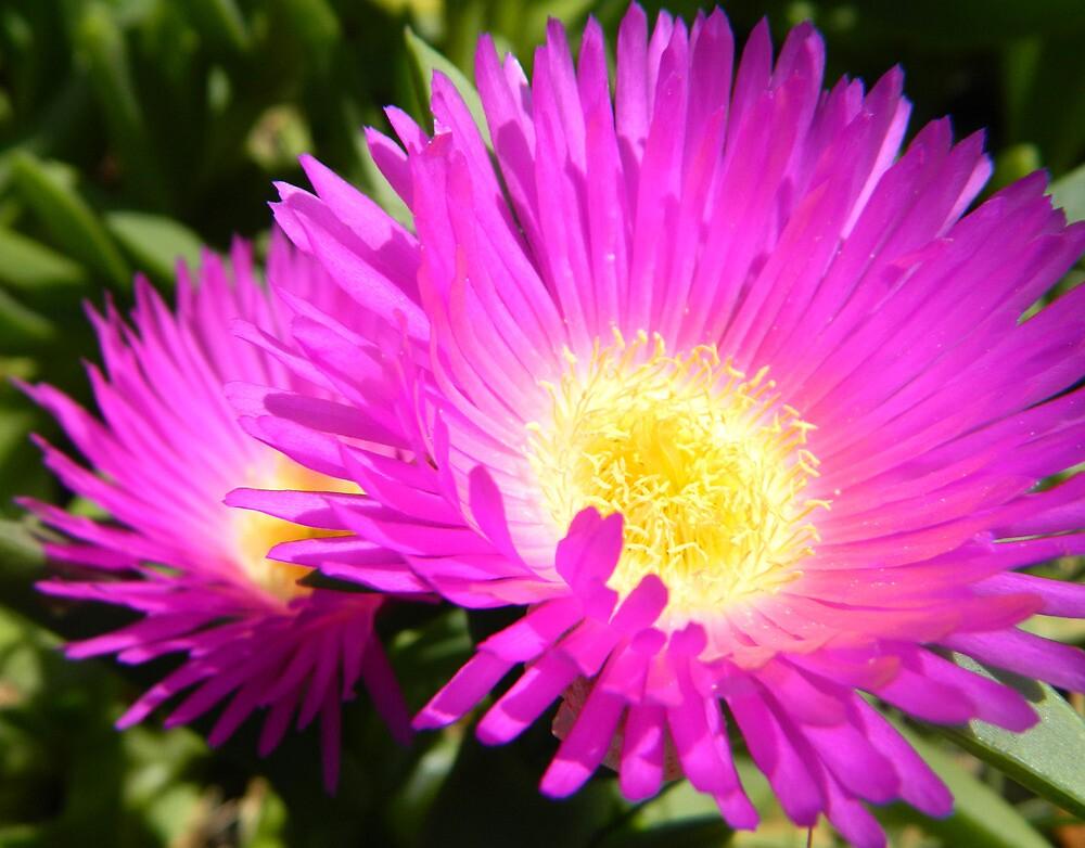 Beach Flower by johnny51