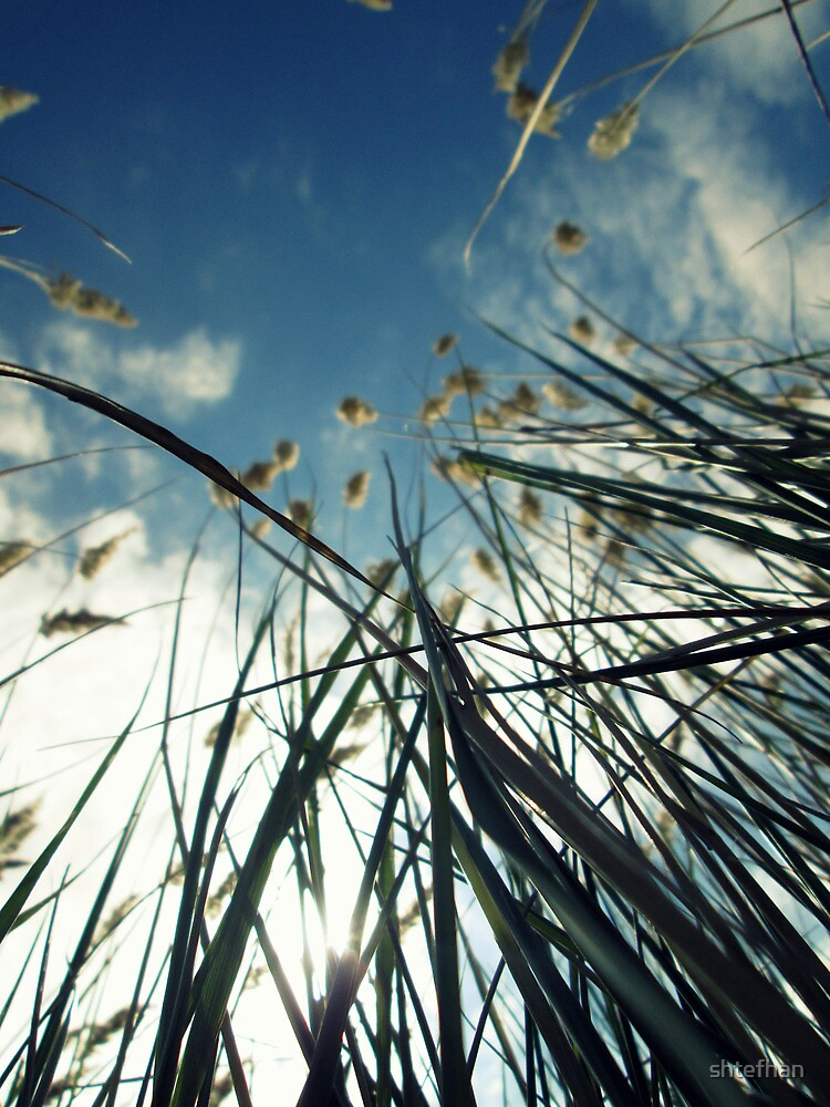 Sky and grass by shtefhan