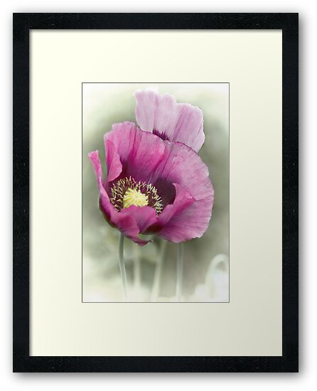 Poppies  by Catherine Hamilton-Veal  ©