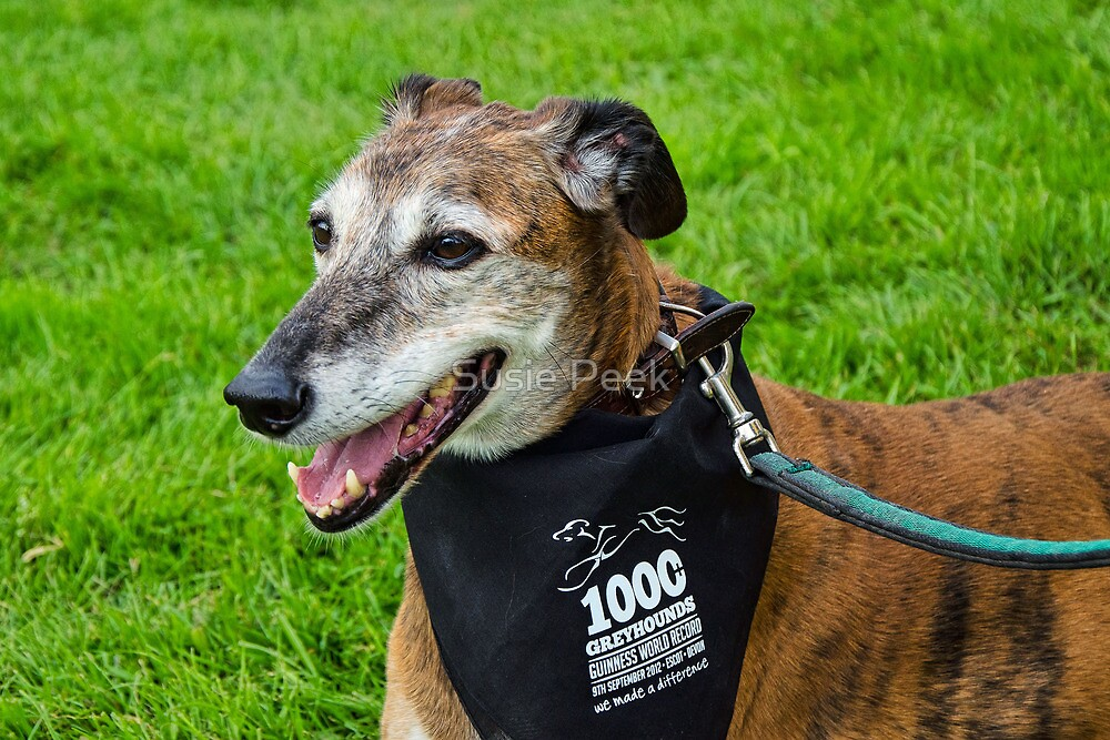 Another Gentle Soul ~ 1000 Greyhounds Event by Susie Peek