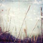 in dreams by Sybille Sterk