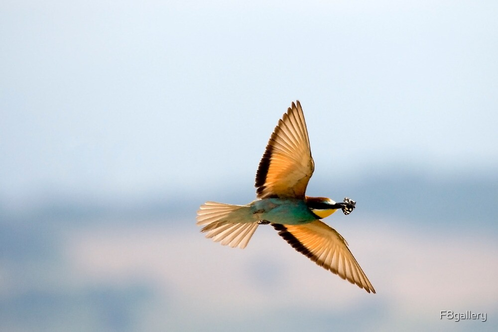 Bee eater  by F8gallery