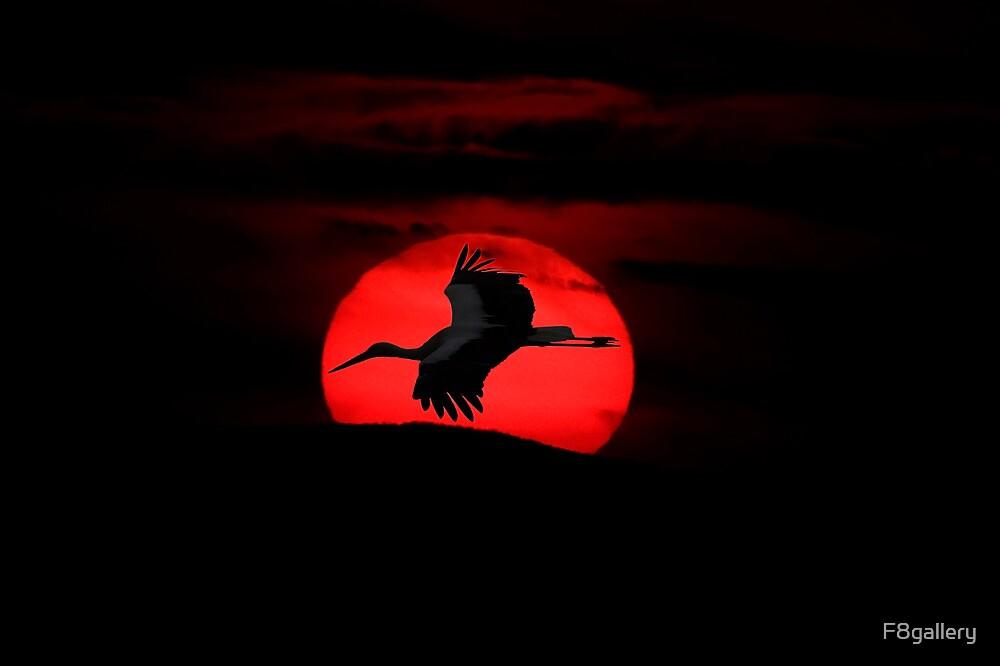 White Stork in flight by F8gallery