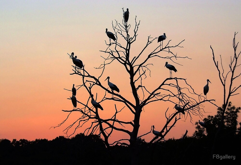 Sunt set Storks  by F8gallery