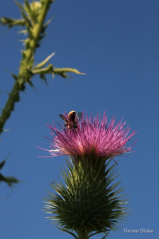 Bee Careful ~ by Renee Blake