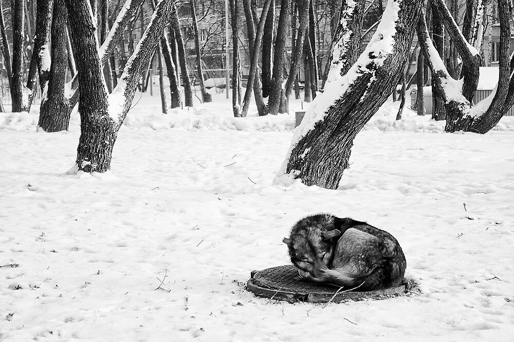 Warm of winter by Roman Naumoff