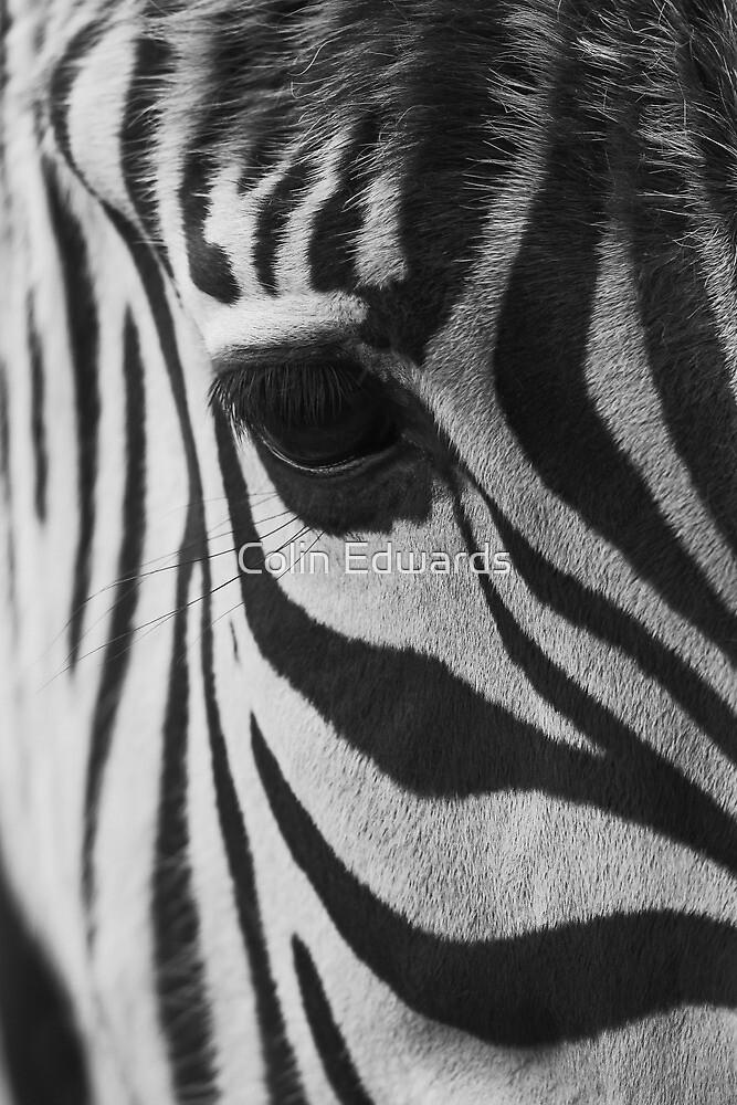 Stripes by Colin Edwards