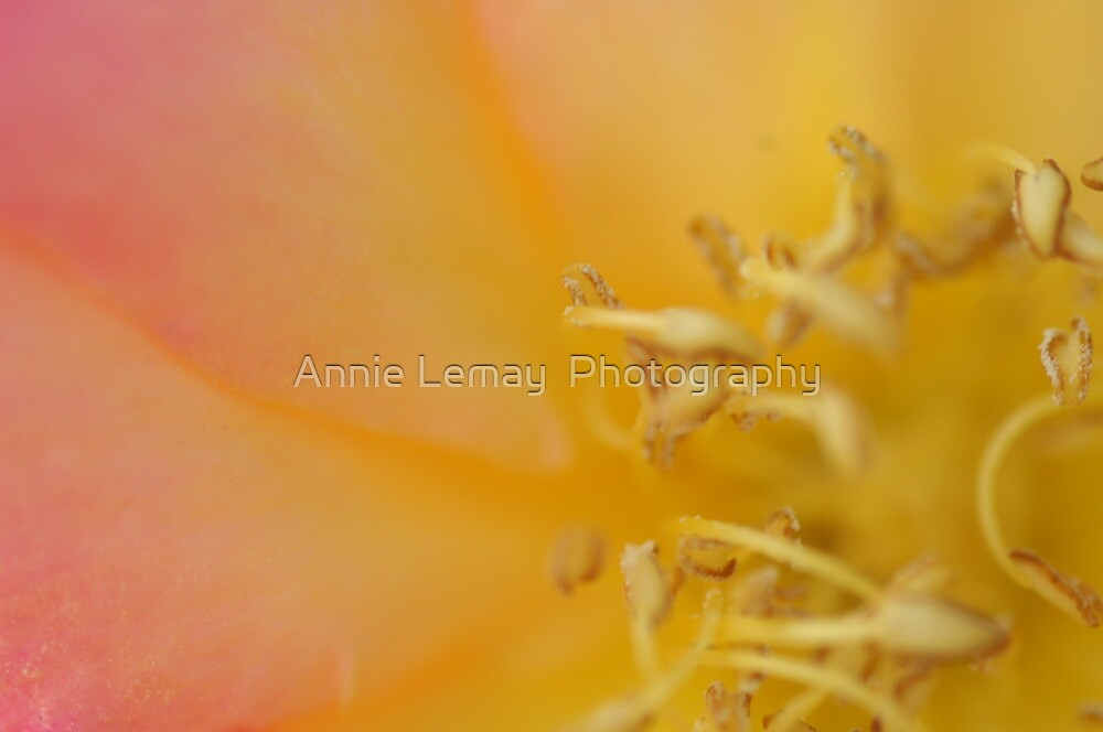 Untitled by Annie Lemay  Photography