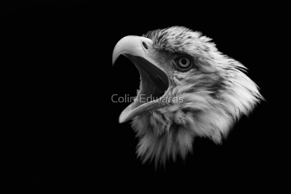 Eagle Head by Colin Edwards
