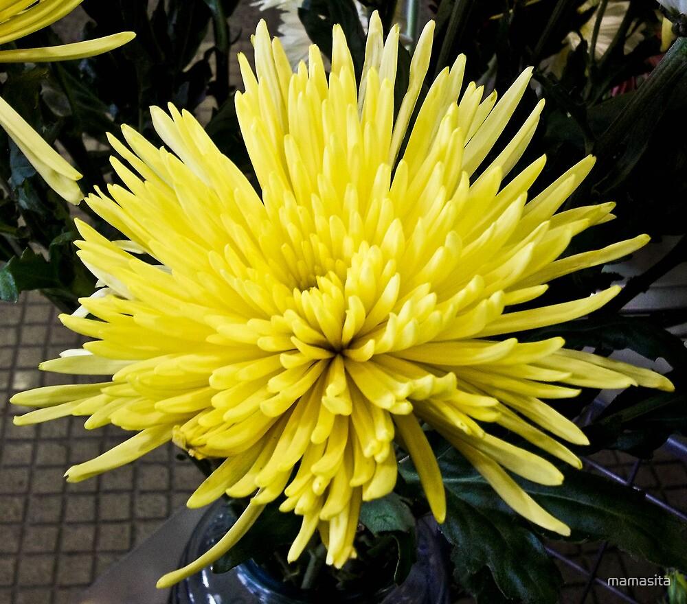 Big Yellow by mamasita
