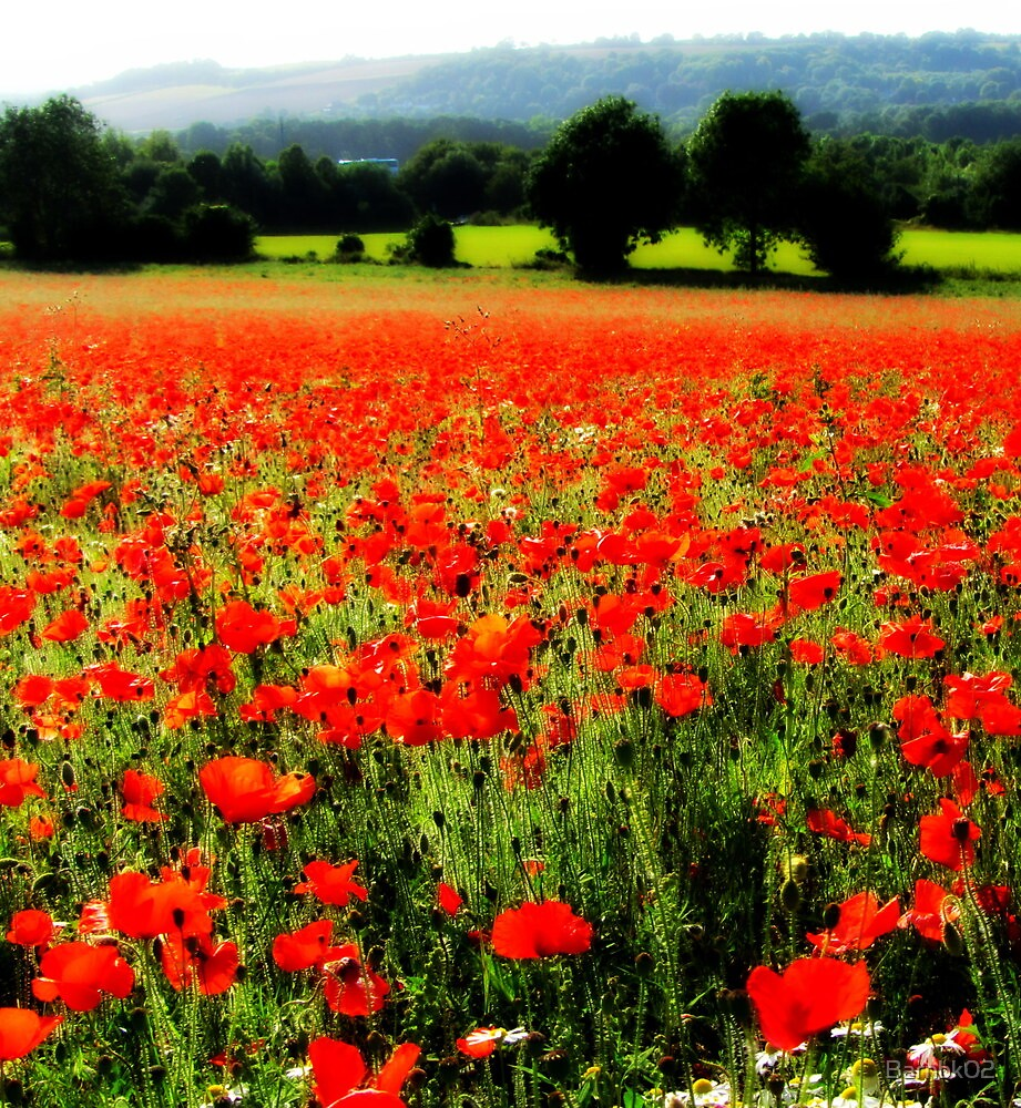 Hazy Poppy Field by Barnbk02