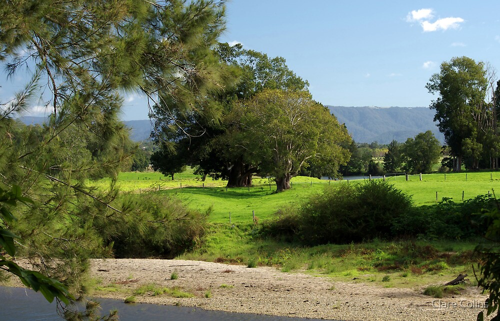 Farmland in the Bellinger Valley by Clare Colins