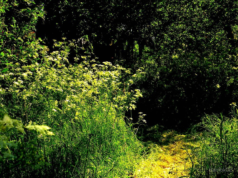 Mown Path by Barnbk02