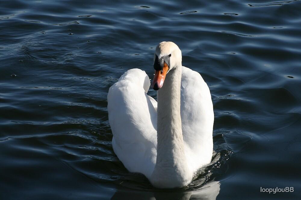 Swan by loopylou88