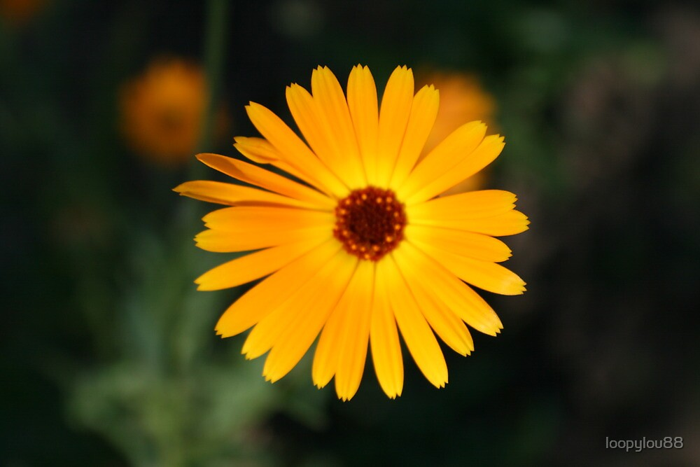 Yello Flower by loopylou88