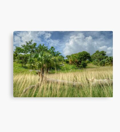 Country Side in Nassau, The Bahamas Canvas Print