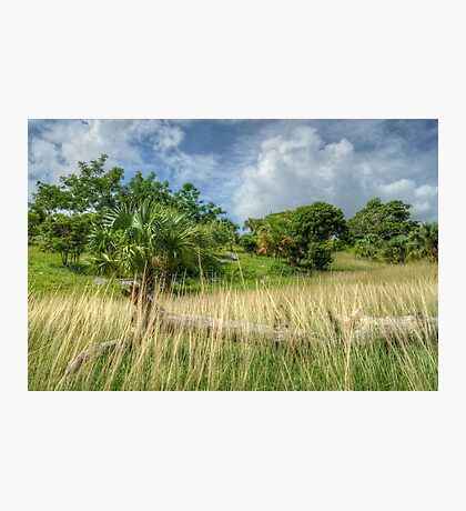 Country Side in Nassau, The Bahamas Photographic Print
