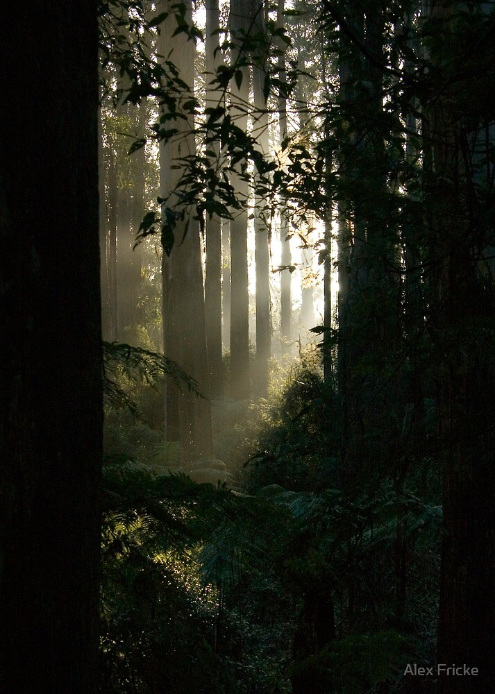 Afternoon in the Forest by Alex Fricke