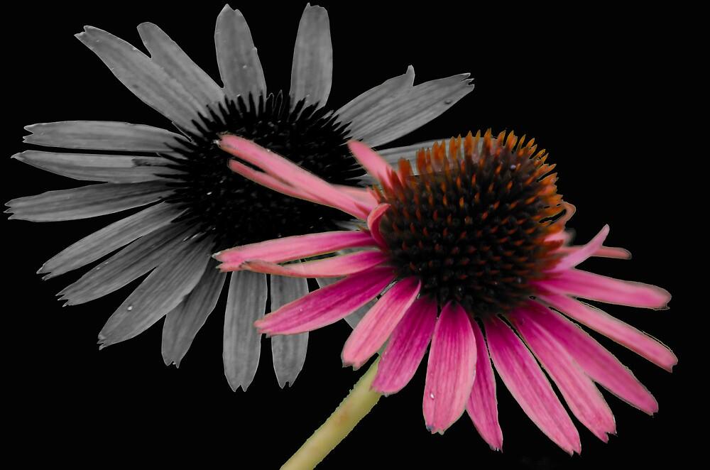 Flower by alocarlos