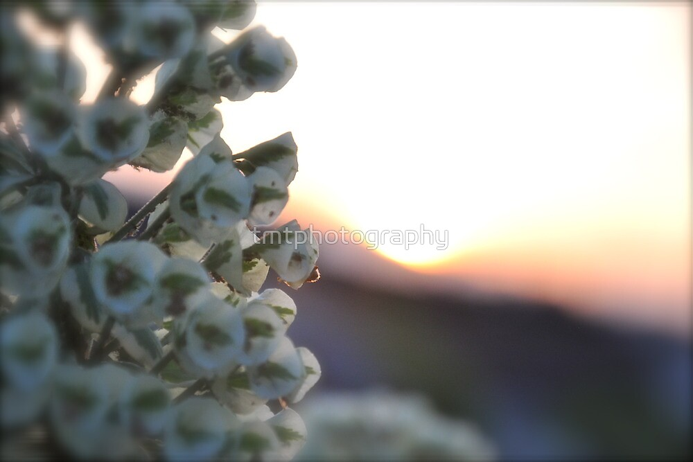 Sunset Coming Through The Flowers..... by tmtphotography