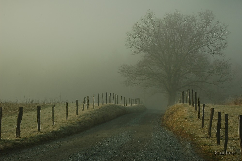 into the fog by dc witmer