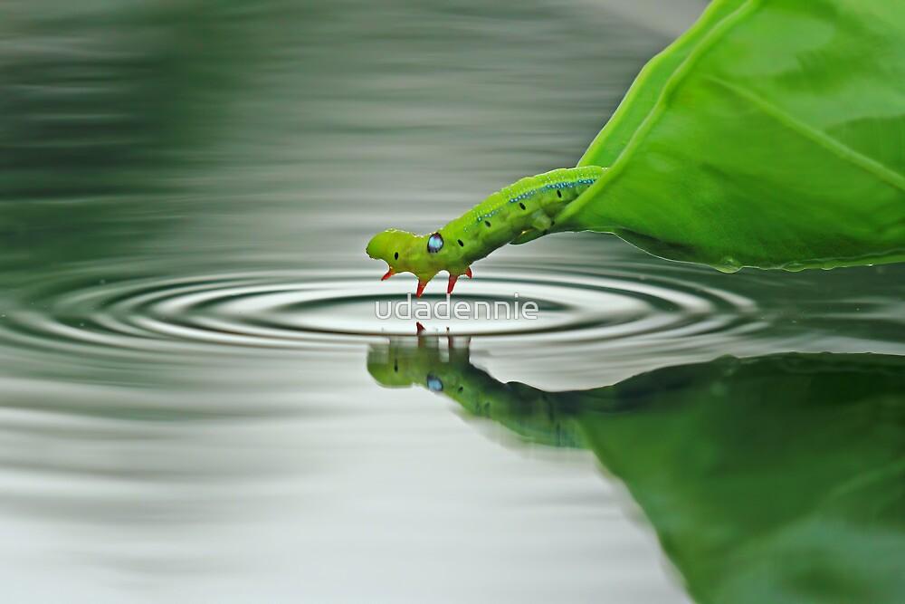 Joking Caterpillar by udadennie