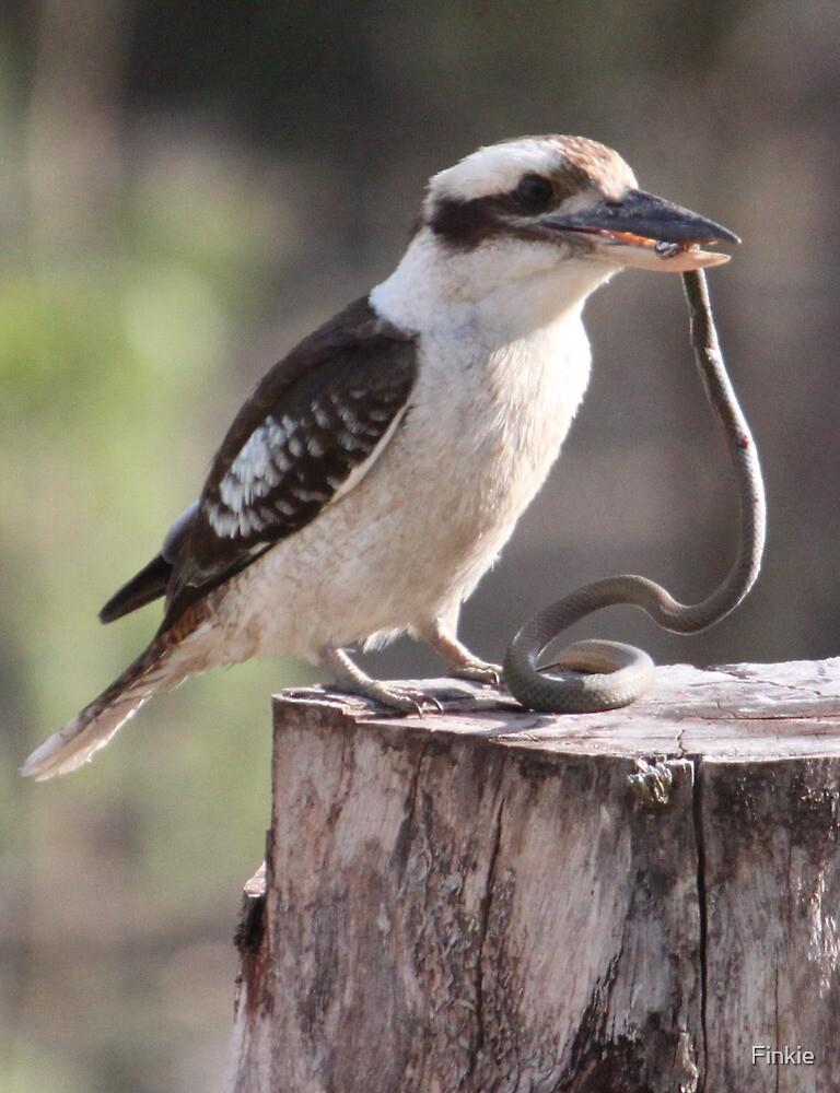 Australian Kookaburra by Finkie