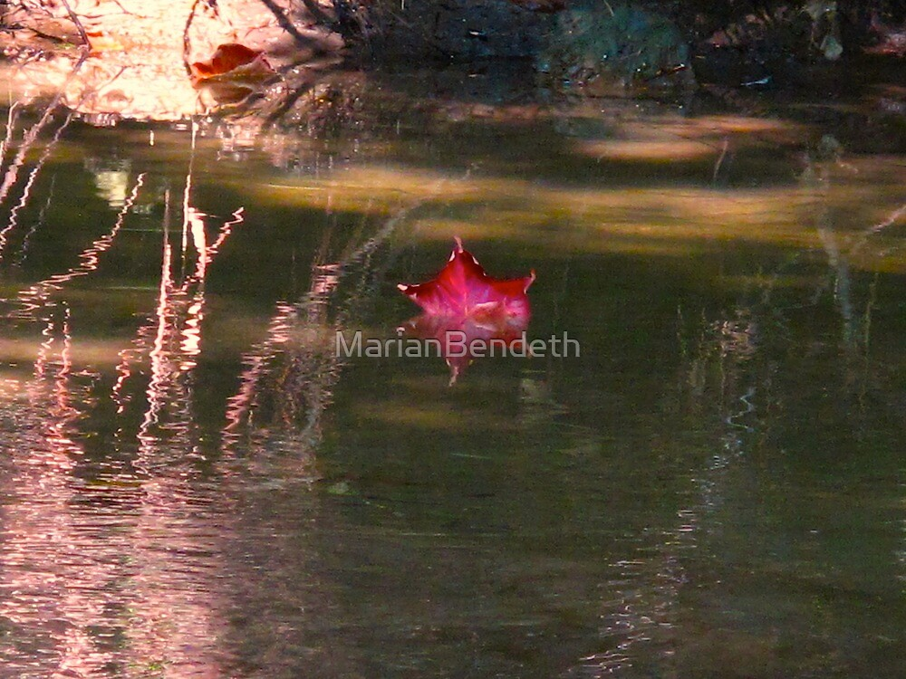 One red leaf by MarianBendeth