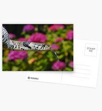European Grass Snake Postcards