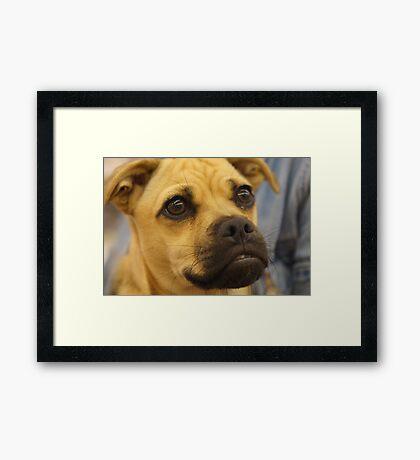 I'm A Cutie Too..... Framed Print