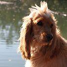 My Pup Jessie by aussiebushstick