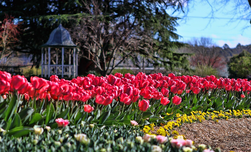 Corbett Gardens, Bowral by yolanda