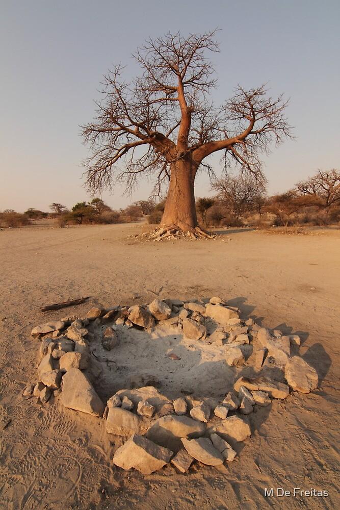 Botswana Boabab Trees by M De Freitas