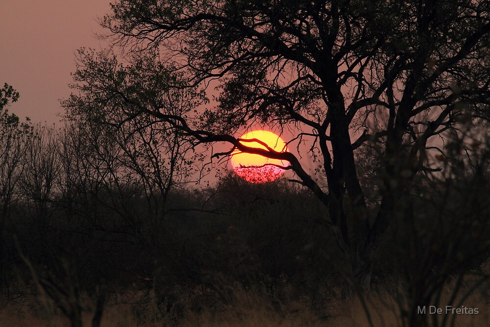 Botswana by M De Freitas