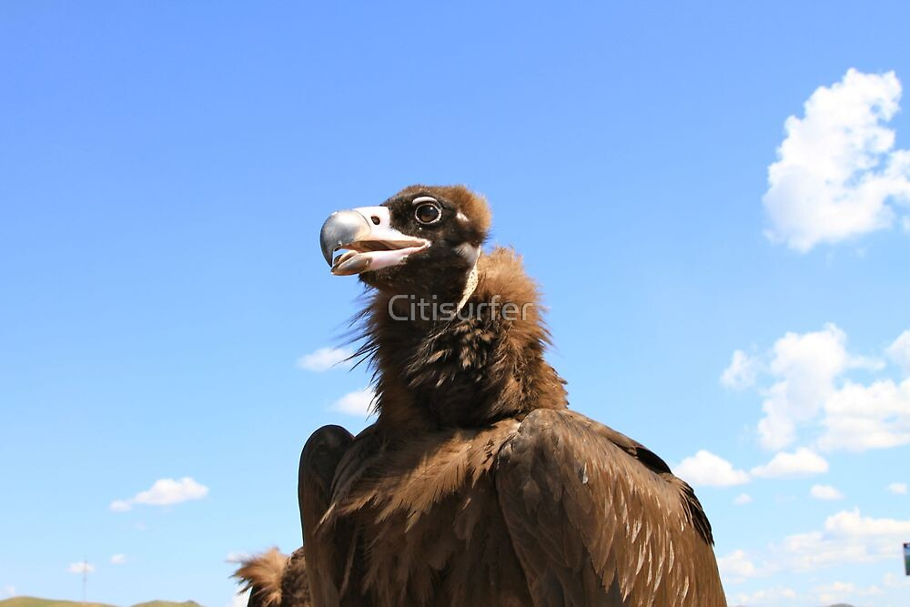 Vulture in Mongolia by Citisurfer