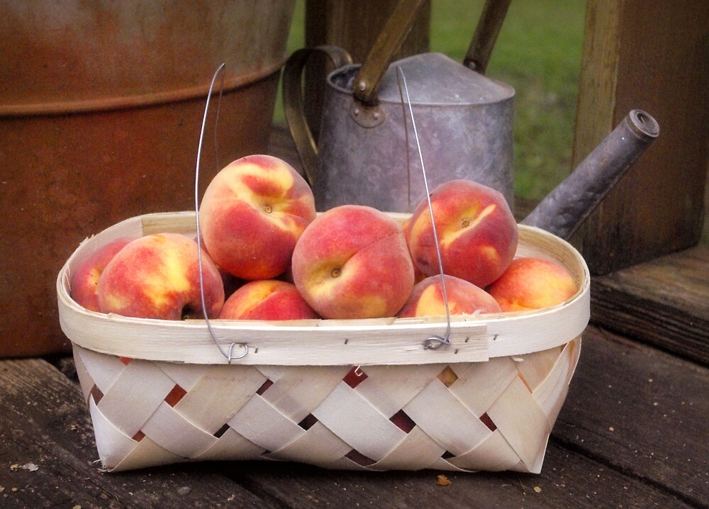 Peaches by Kristine McKay Kinder