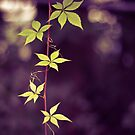 *Purple and Green by GoldenRectangle
