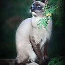 Beautiful Stray by Ticker
