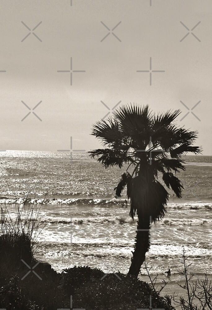 Solana Beach Palm by Heather Friedman