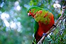 King Parrot by Renee Hubbard Fine Art Photography