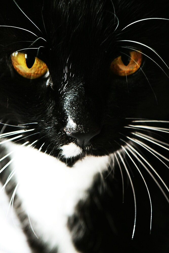Guinness the cat by wednesday11
