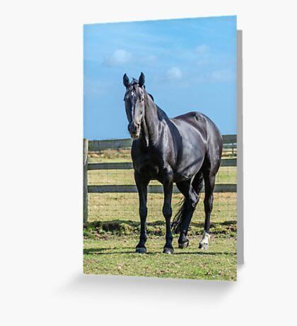 Cheval Noir Greeting Card