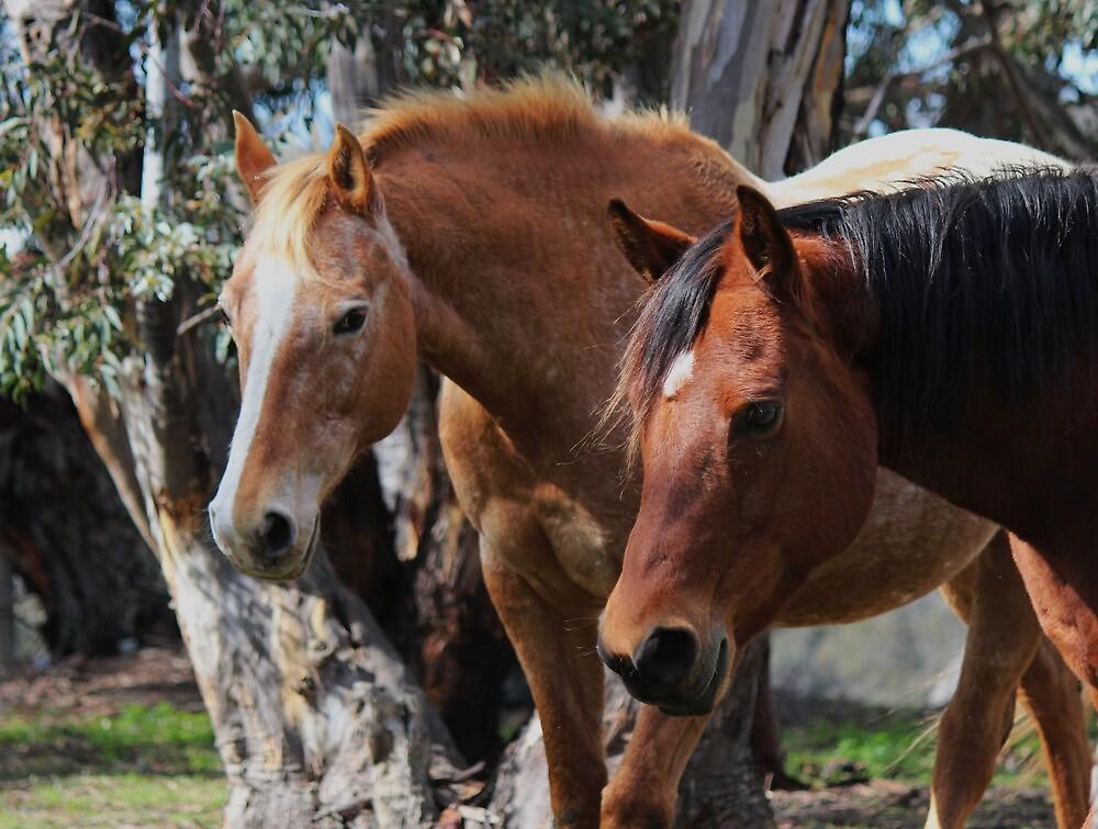 horses - Cambridge farm hilltop by gaylene
