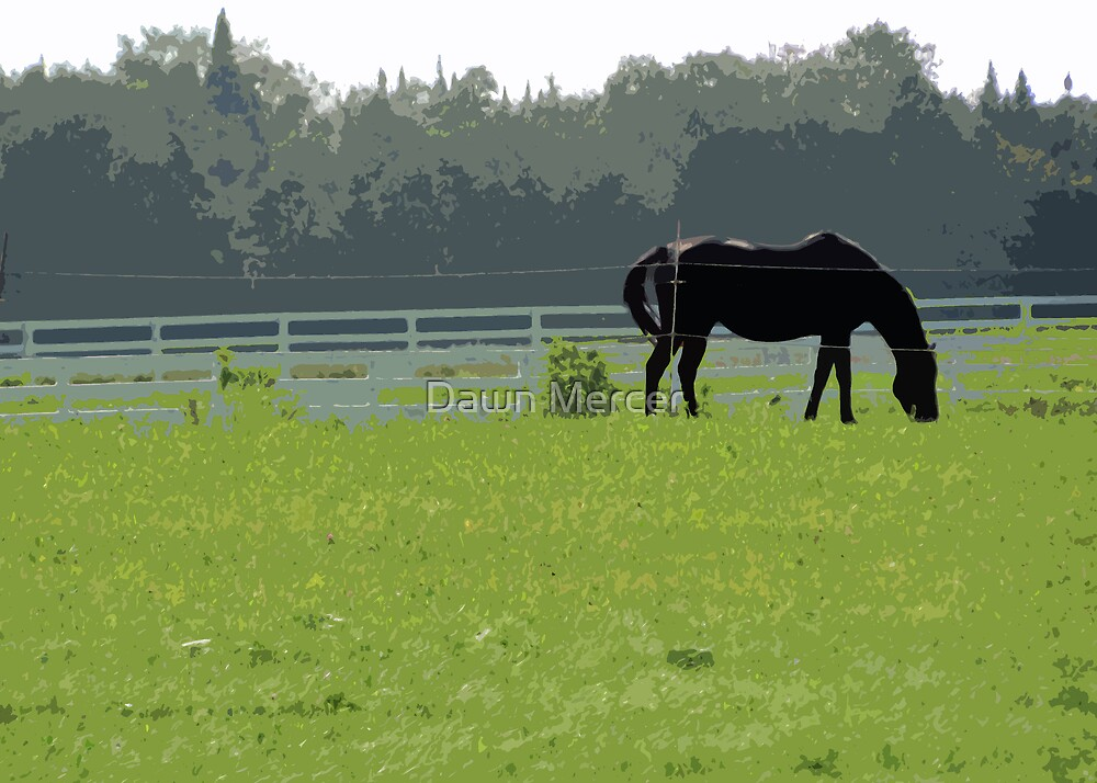 Horse In Field  by MissDawnM