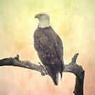 Bald Eagle by designingjudy