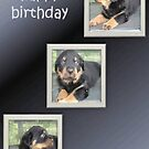 Rottweiler Collage Birthday Greeting by taiche