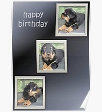 Rottweiler Collage Birthday Greeting Poster