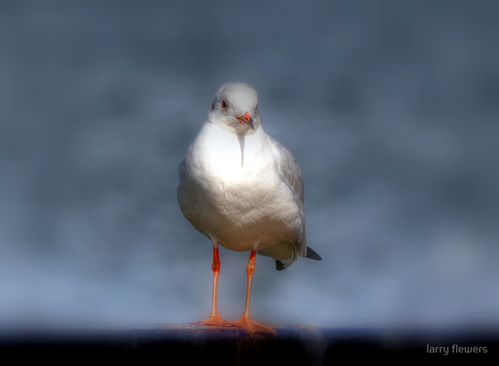 Lone Gull by larry flewers