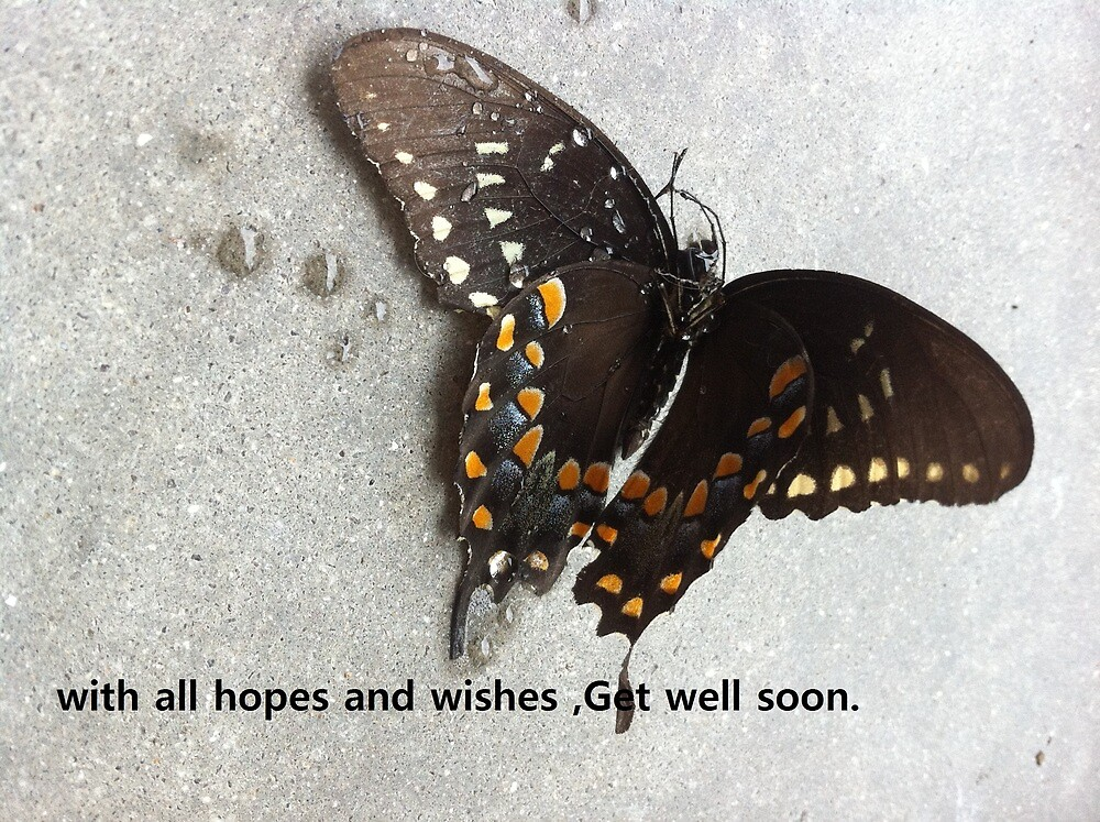 get well soon with butterflies by Mdevaul