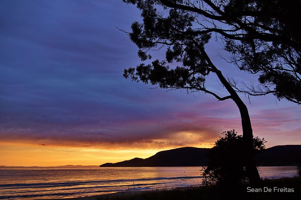 Adventure Bay Foreshore Trees - Bruny Island, Tasmania, Australia by PC1134